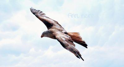 freedom-589576_1920